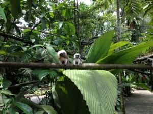 Accueil au zoo