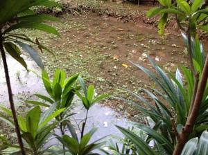 Jardin rural