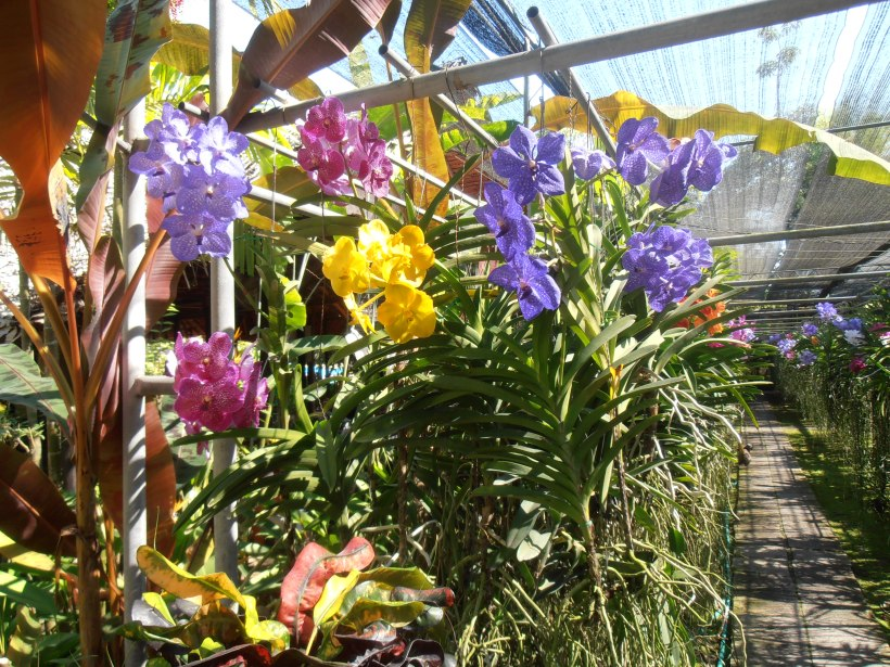 Orchids Farm
