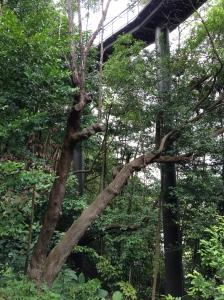 Canopy de Kentridge