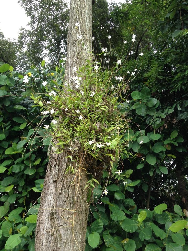Décourageant de voir ces orchidées qui poussent ainsi!